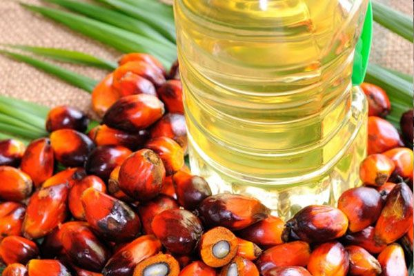 India, US palm oil imports show difference in demand, activity